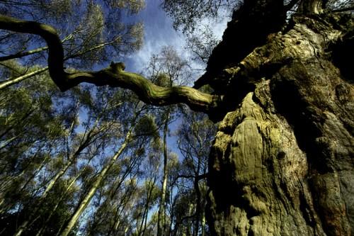 sherwood-forest.jpg