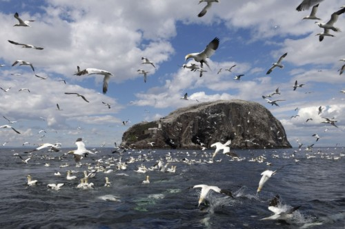 Bass rock Scotland.jpg
