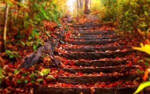 automne-5.jpg