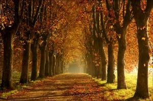allee-en-automne.jpg